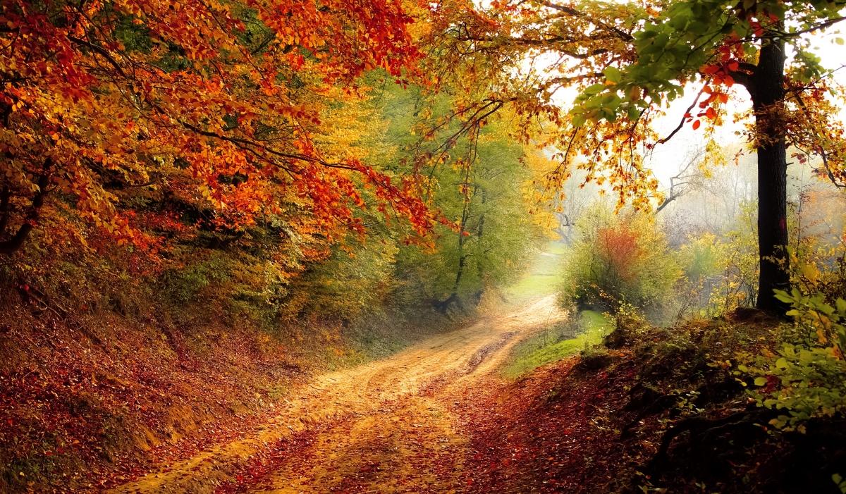 Psychologiepraktijk PEP Baarn landscape-tree-nature-forest-light-plant-839463-pxhere.com_ Home  Praktijk PEP